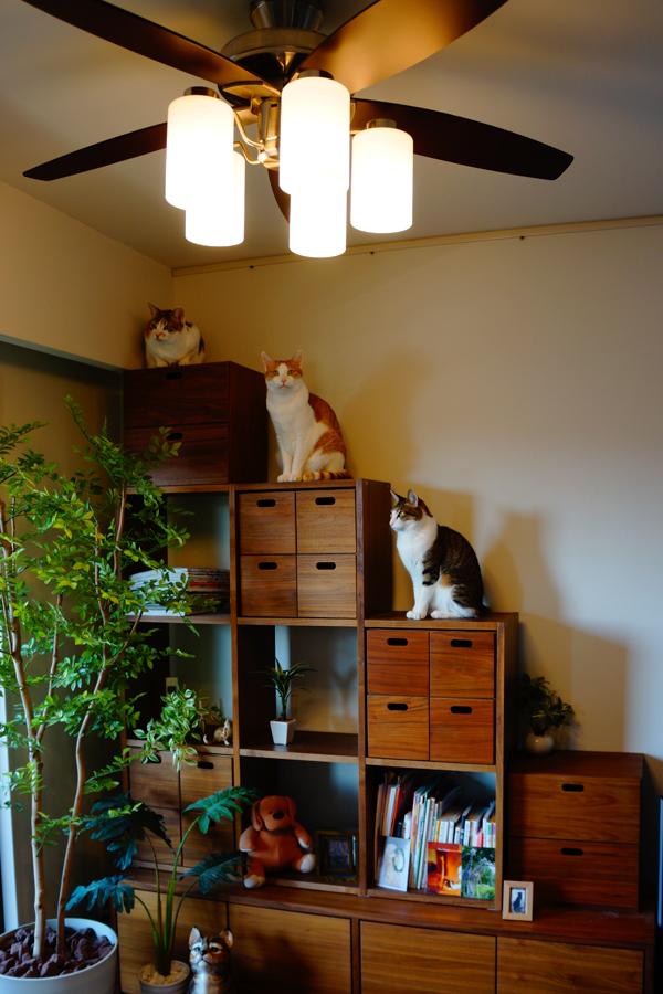階段状家具